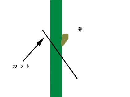 刺し穂2.JPG